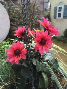 3花.jpg